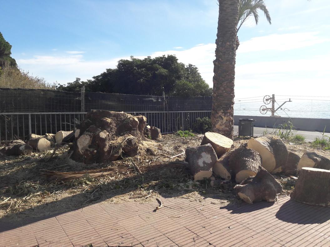 Ombús talats a Sant Pol de Mar