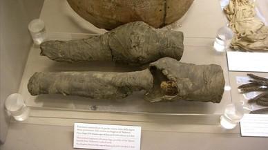 Les cames de Nefertari, dona de Ramsès II, ¿a Torí?