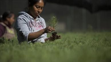 Una jovende la comunidad de Cherán, trabajando en un vivero de árboles en el estado de Michoacán, México.