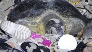 Una tortuga verde trata de anidar en una playa de la isla de Navidad (Australia) llena de basura y plástico.