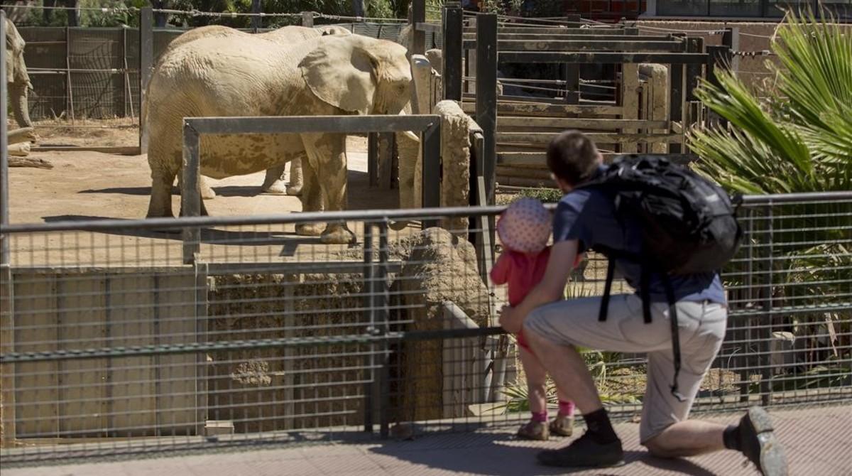 """Recogida oficial de firmas para poner fin al modelo """"colonialista"""" del Zoo de Barcelona"""