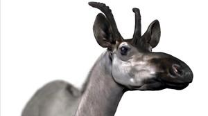 amadridejos40756156 d rex reconstruction descubrimiento especie jirafa prehist171031124726
