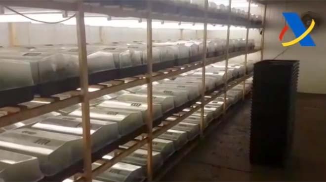 L'Agència Tributària ha detingut 12 persones que ocultaven 135.400 plantes de marihuana.