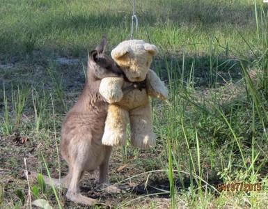 Fotografía compartida en internet por el hijo de la cuidadora del canguro.