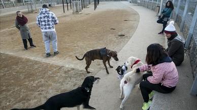 Barcelona tendrá 10 zonas de recreo para perros la próxima primavera