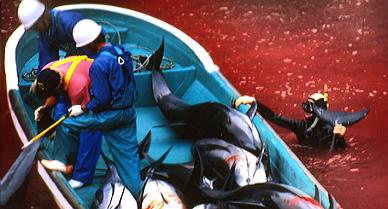 Pescadores de delfines, en el Mar de Jap�n.