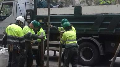 El Ayuntamiento de Barcelona inicia la campa�a de plantaci�n de arbolado