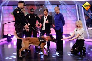 televisión hormiguero lasexta perro policia jubilado