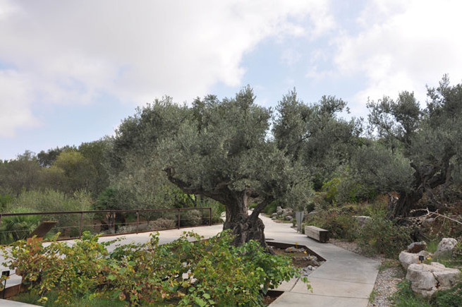 Los gemelos del bot nico de montju c for Jardin botanico montjuic