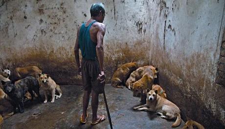 Un matarife se dispone a coger a uno de los perros cautivos para matarlo con un garrote en el matadero de Zhanjiang.