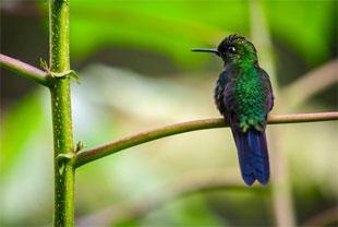 Celeste, la maravilla secreta de Costa Rica