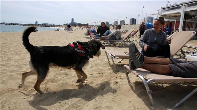 Un perro, en una playa de Barcelona, el pasado fin de semana.