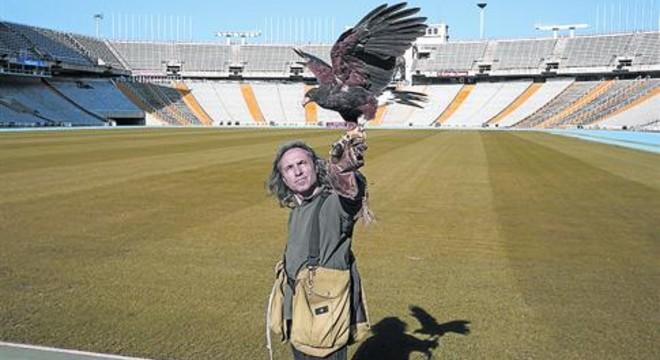 Àguila espantagavines