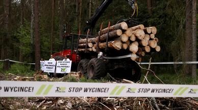 Polonia desafía a la justicia europea con la tala de árboles del bosque de Bialowieza