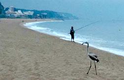 Un flamenco hace un alto en la playa de Arenys