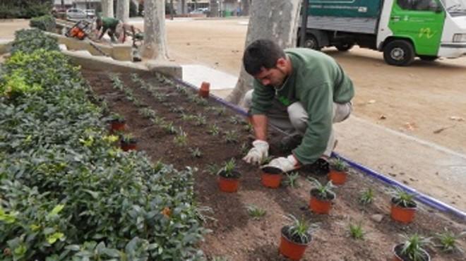 Terrassa empieza a replantar más de 4.000 arbustos perdidos en el vendaval de 2014