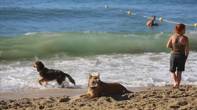La nueva zona habilitada para perros en la playa de Llevant de Barcelona.