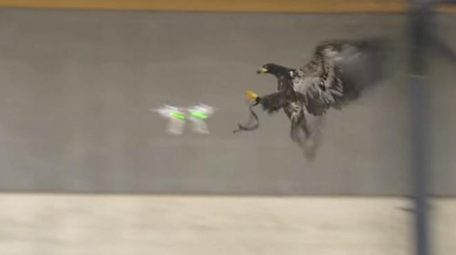Scotland Yard es planteja fer servir àguiles contra drons