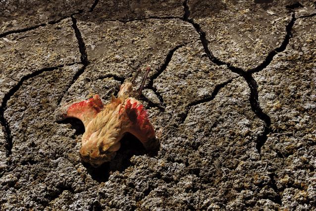 Un flamenco muerto en el lago Empakai, seco por la sequía, en Tanzania.
