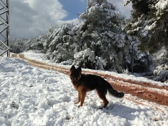 Un lector y su perro disfrutando de la nieve el Vallirana
