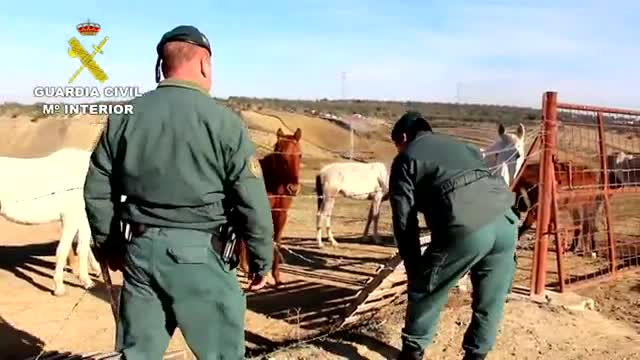 Hallados doce equinos famélicos y abandonados en una finca de Huelva