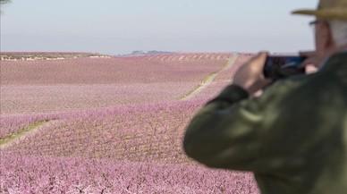 Aitona, el Japó rosat de Catalunya