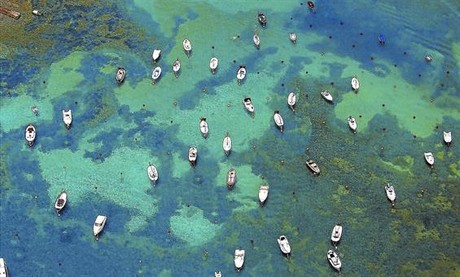 Embarcaciones de recreo fondeadas en la bah�a de Cadaqu�s.