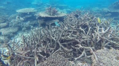 Greenpeace alerta d'una retallada pressupostària del 45% en la lluita contra el canvi climàtic