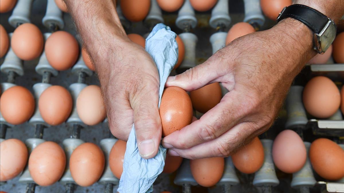 zentauroepp39656696 a worker cleans an egg in a the poultry farm in hesbaye regi170812125523