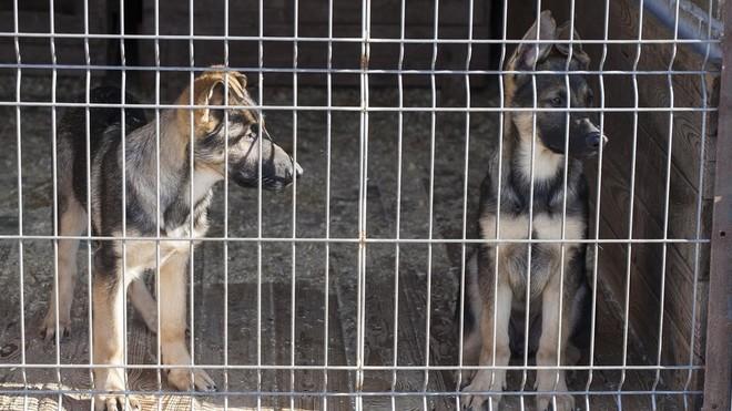 juez investiga tienda animales barcelona maltratar perros