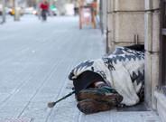 El número de personas sin hogar ha pasado de 1.190 personas alojadas en el año 2008 a las 1.907 del 2016.