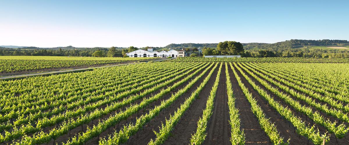 El vino catalán busca rentabilidad en EEUU