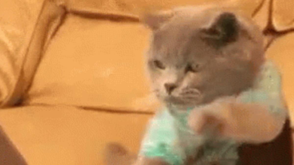 Gif protagonizado por un gatito muy trabajador.