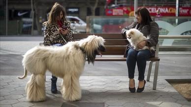 Dos mujeres conversan junto a sus perros en un banco de paseo de Gràcia.