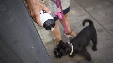 Mataró multarà amb fins a 750 euros els propietaris que no reguin els orins dels seus animals