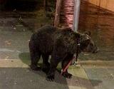 V�deo en el que se ve al domador con el oso por las calles de la localidad valenciana de C�rcer