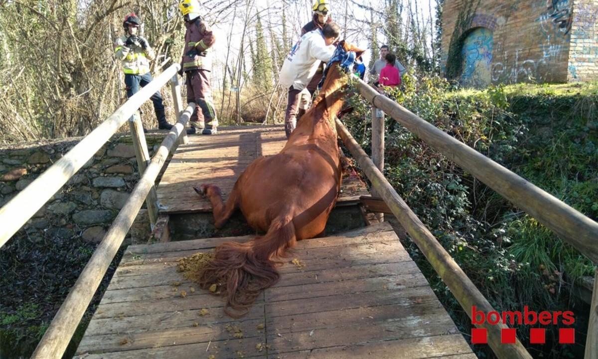 Los Bomberos rescatan a un caballo atrapado en un puente en Bescanó
