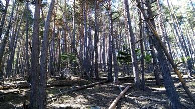 El cambio climático obligará a modificar la gestión de los bosques