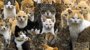 jgarcia28885040 cats crowd the harbour on aoshima island in the ehime prefec170114152154