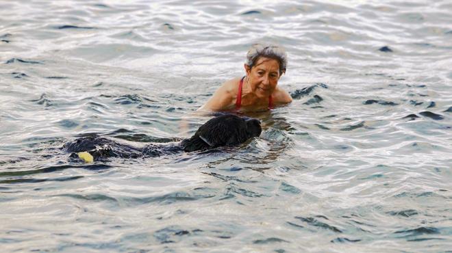 El Bongo, el gos malalt de Tossa, torna a banyar-se al mar