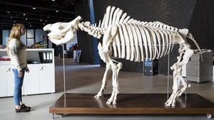 zentauroepp41045897 rinoceronte museu blau171124162153