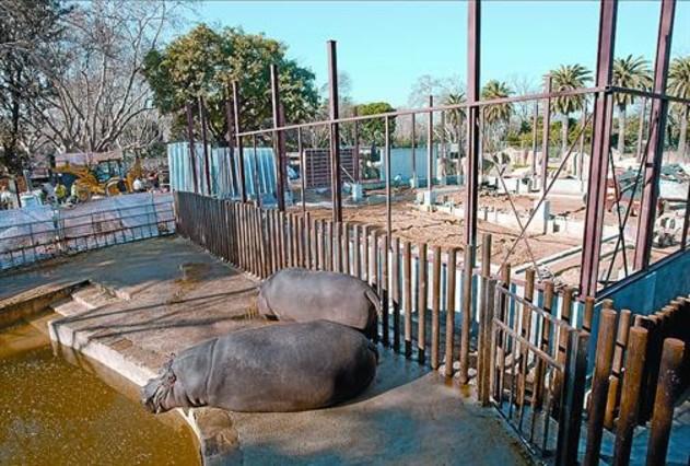 El Zoo se aferra a los elefantes y prepara una colonia nutrida