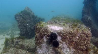 El vell pantalà de la tèrmica de Sant Adrià es preservarà com a escull per a la fauna marina