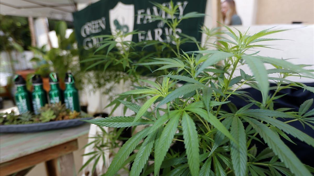 Encuentro de la industria del cannabis en Long Beach, California.
