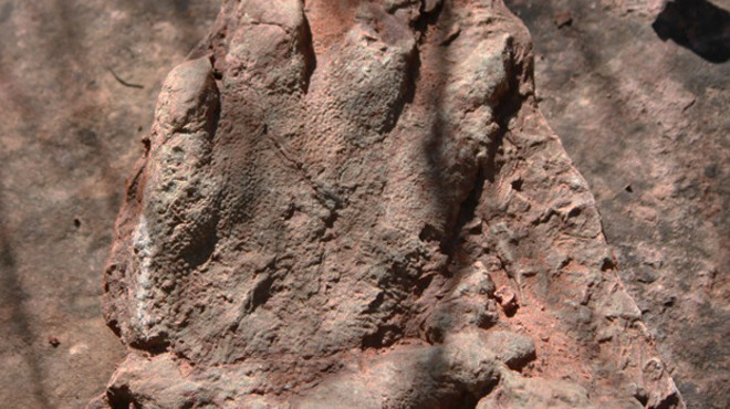La huella encontrada por un excursionista.