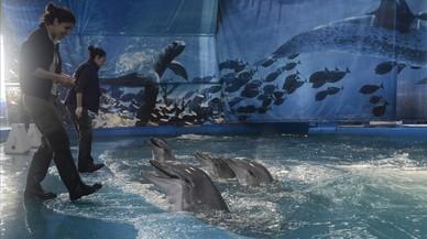 Els empleats del Zoo defensen que la solució més assenyada és conservar els dofins