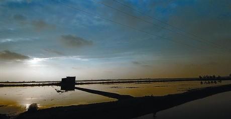 Arrossars inundats i a punt per a la sembra al delta de l'Ebre, dins de l'àrea qualificada com a Reserva de la Biosfera.