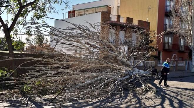 Un agente presencia la caída de un árbol en Reus.