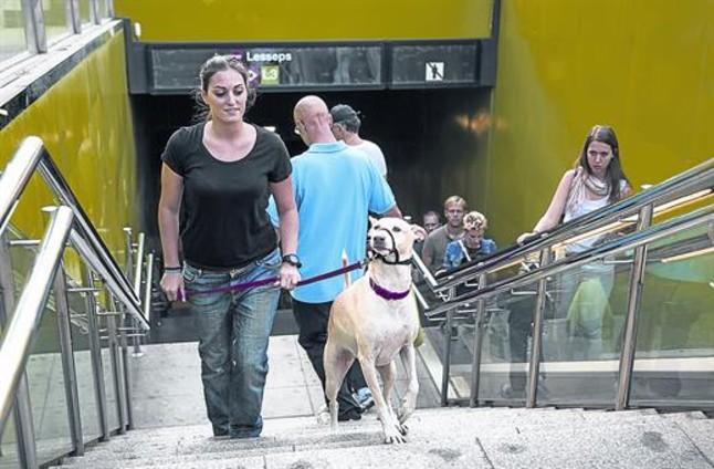 Οι σκύλοι μπαίνουν στο μετρό της Βαρκελώνης...