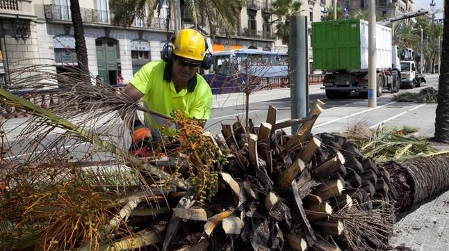 barcelona convoca plazas de auxiliar de jardiner a